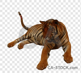 Animal cat tiger cut out transparent.