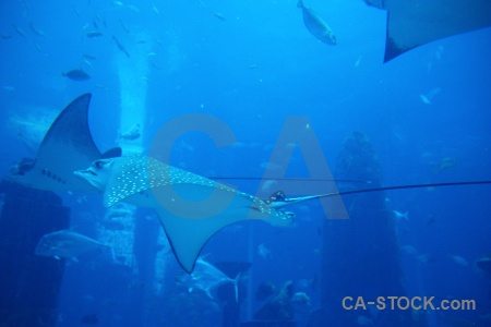 Animal cyan fish blue asia.
