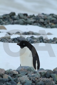 Animal day 5 antarctica cruise south pole millerand island.