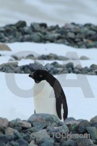 Animal day 5 antarctica cruise south pole millerand island.