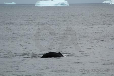 Animal day 6 antarctica antarctic peninsula adelaide island.