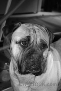 Animal dog gray.
