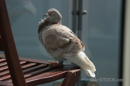 Animal dove pigeon bird.