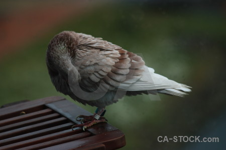 Animal dove pigeon bird green.
