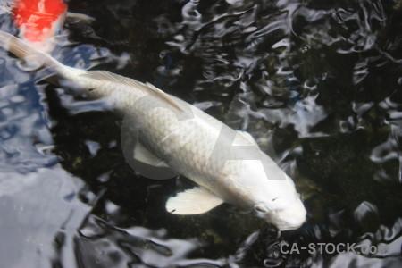 Animal fish.