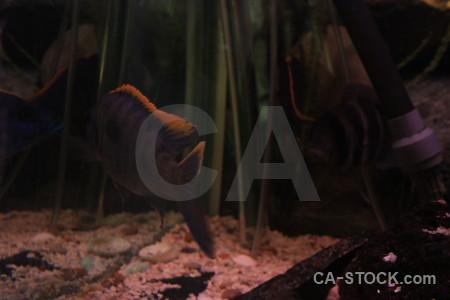 Animal fish black.