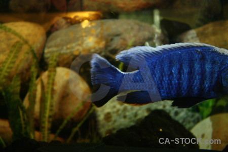 Animal fish blue green.