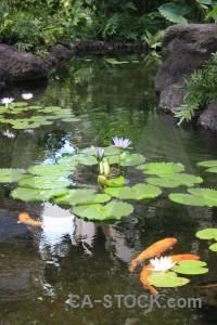 Animal fish lily plant green.