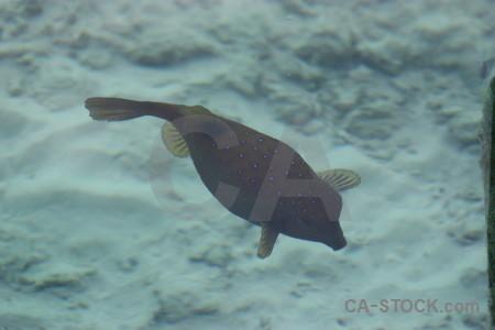 Animal fish underwater.
