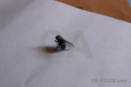 Animal fly gray insect.