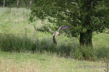 Animal flying green bird.