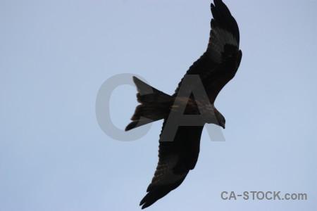 Animal flying sky bird.