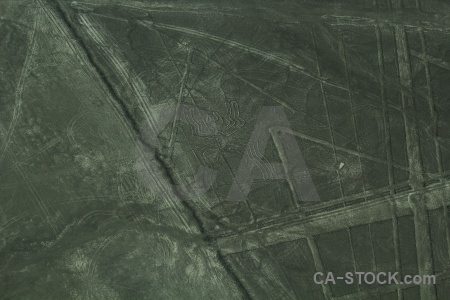 Animal geoglyph flying spider nazca.