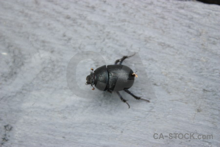 Animal gray insect beetle.