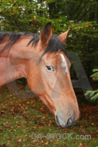 Animal green brown horse.