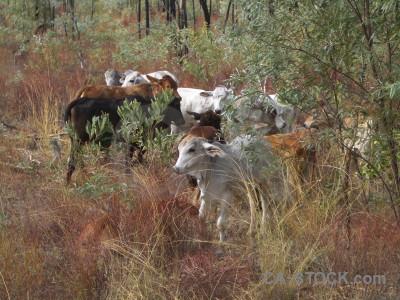 Animal green cattle.