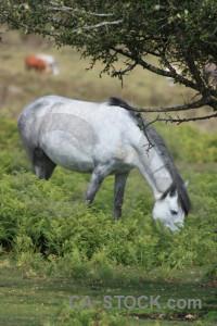 Animal green horse.