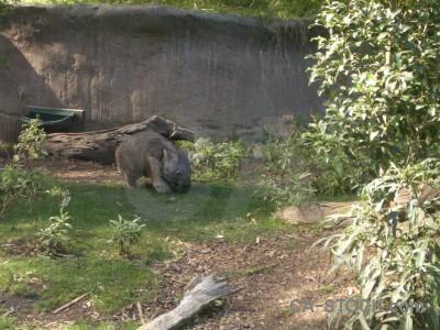 Animal green wombat.