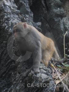 Animal ha long bay monkey unesco vietnam.
