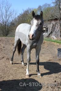 Animal horse.