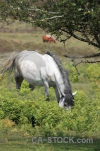 Animal horse green.