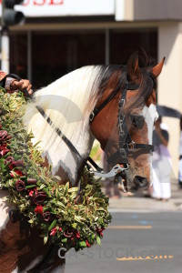 Animal horse white.