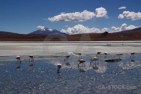 Animal lake sky bird altitude.