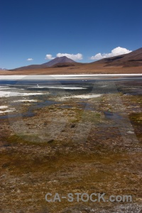 Animal landscape andes salt lake mountain.