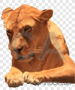 Animal lion cut out transparent cat.