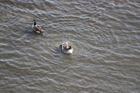 Animal pond aquatic bird water.
