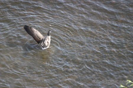Animal pond aquatic water bird.