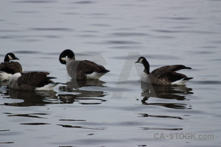 Animal pond bird aquatic water.