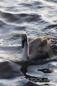 Animal pond water aquatic bird.