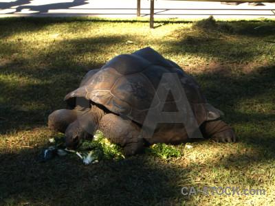 Animal reptile tortoise turtle.