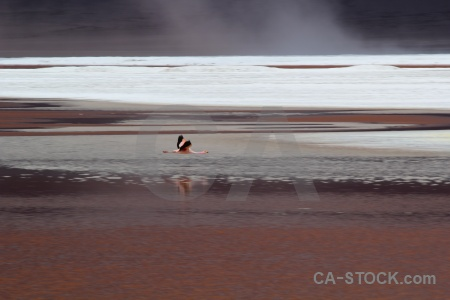 Animal salt lake water andes bolivia.