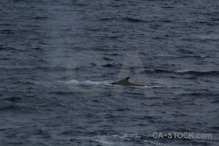 Animal sea drake passage whale water.
