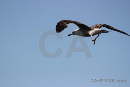 Animal seagull sky bird flying.
