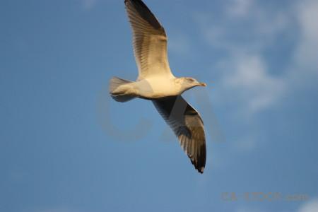 Animal seagull sky flying bird.