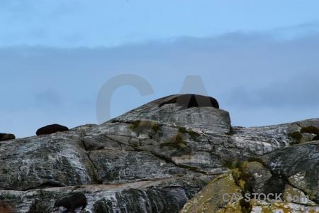 Animal seal fiord south island doubtful sound.