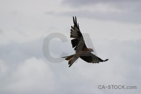 Animal sky bird flying gray.