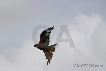 Animal sky bird gray flying.
