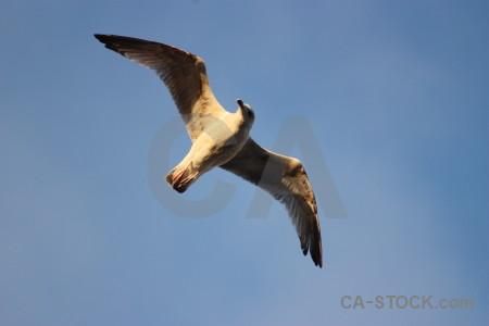 Animal sky bird seagull flying.