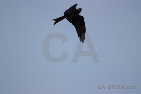Animal sky flying bird.