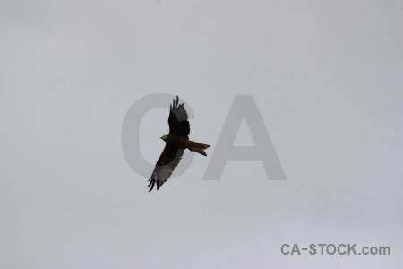 Animal sky flying gray bird.