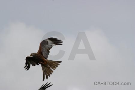 Animal sky gray bird flying.
