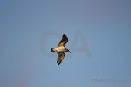 Animal sky seagull flying bird.