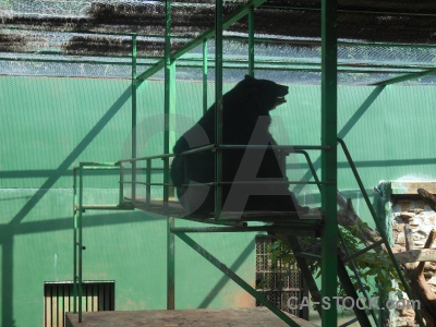 Animal southeast asia bear thailand cage.