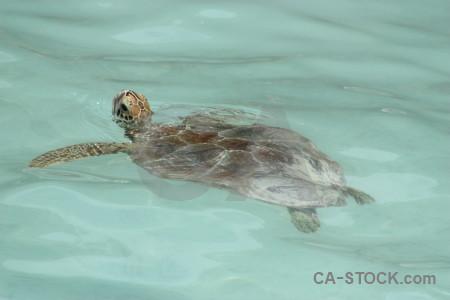 Animal turtle.