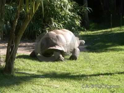 Animal turtle green.