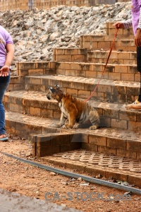 Animal wat pha luang ta bua tiger step asia.